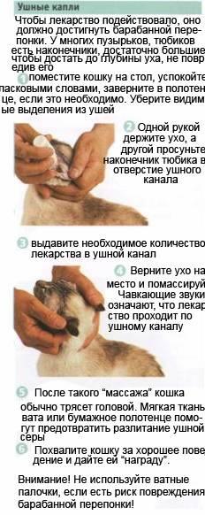 Как безопасно почистить уши кошке