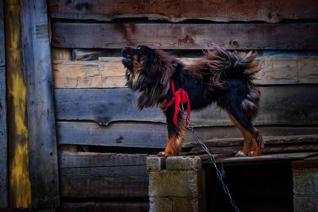 Топ-10 самых сильных пород собак