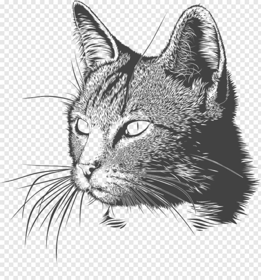 Как нарисовать кошку, кота, котенка поэтапно карандашом. топ вариантов для начинающих