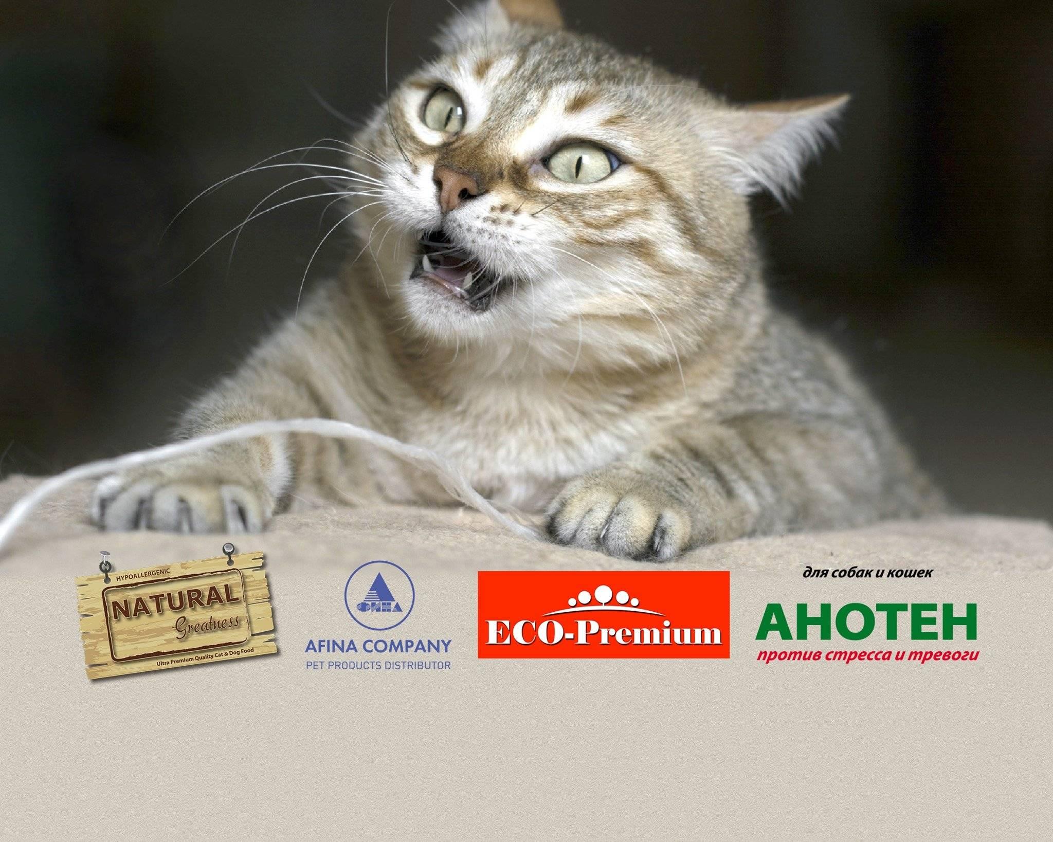 ᐉ что нужно знать, чтобы стать заводчиком кошек? - ➡ motildazoo.ru