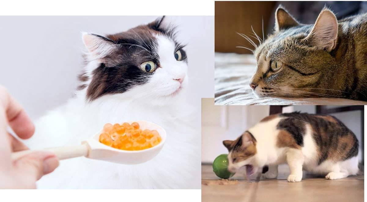 Десять самых опасных ядов для кошки