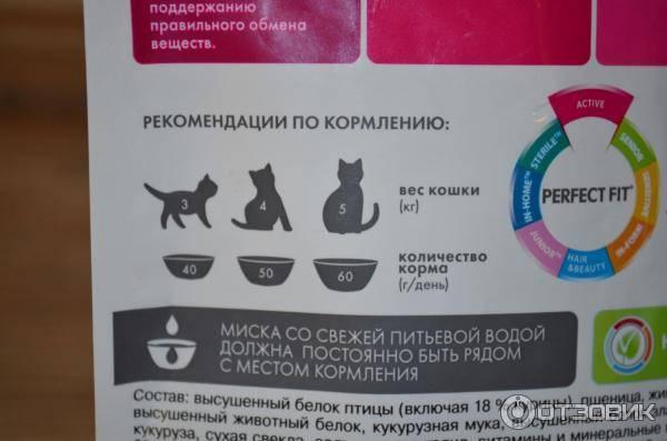 Как самостоятельно выкормить котенка без кошки?