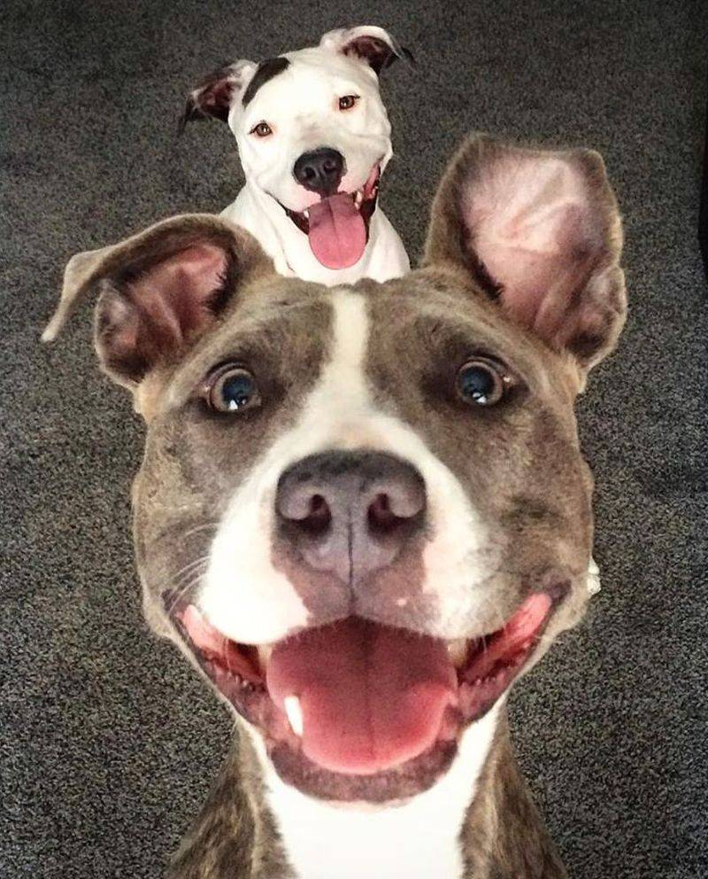 Самые смешные собаки в мире