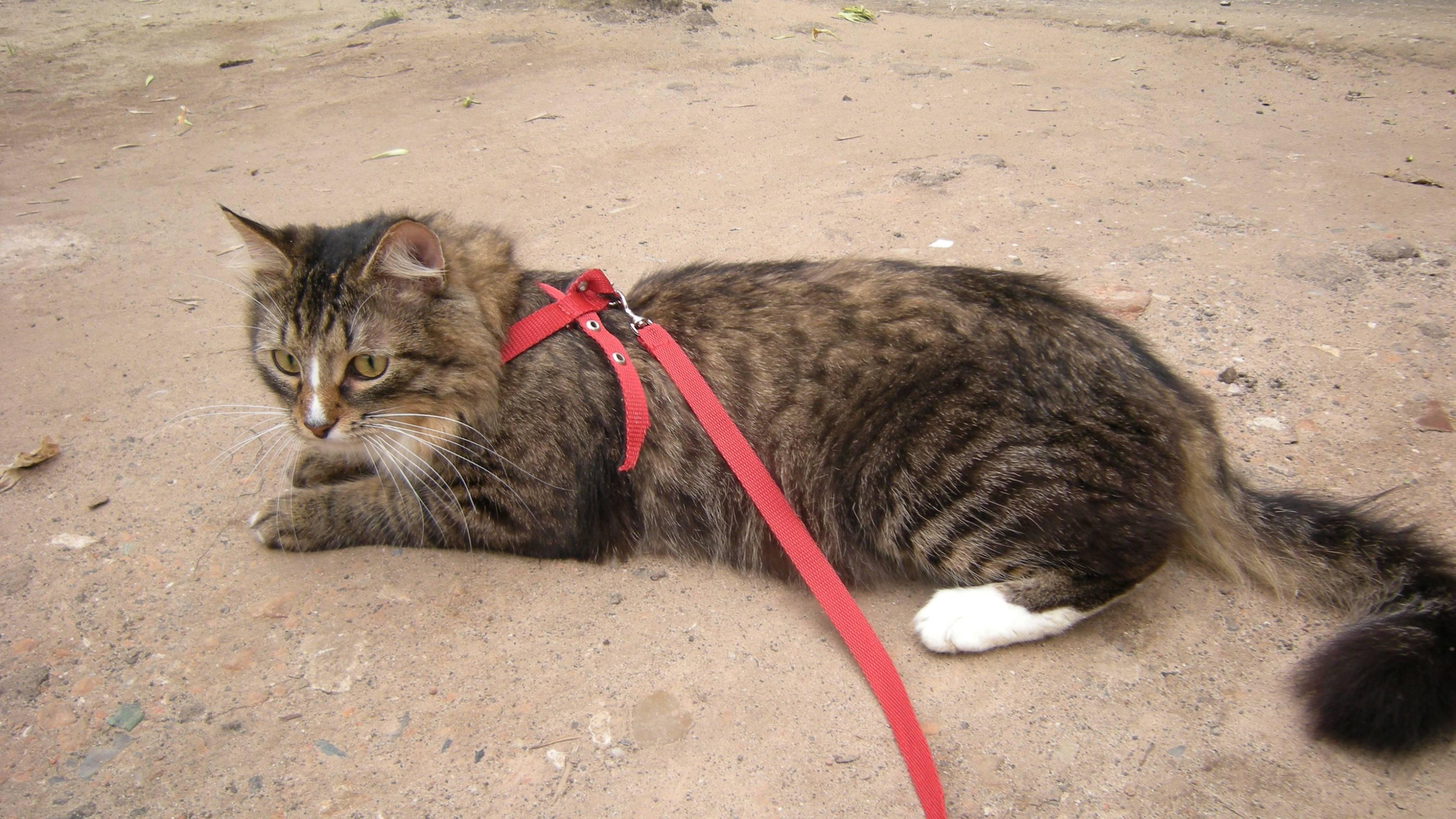 Как отучить кошку от улицы в несколько шагов как отучить кошку от улицы в несколько шагов