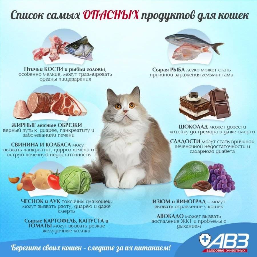 7 продуктов, которыми нельзя кормить собак и кошек