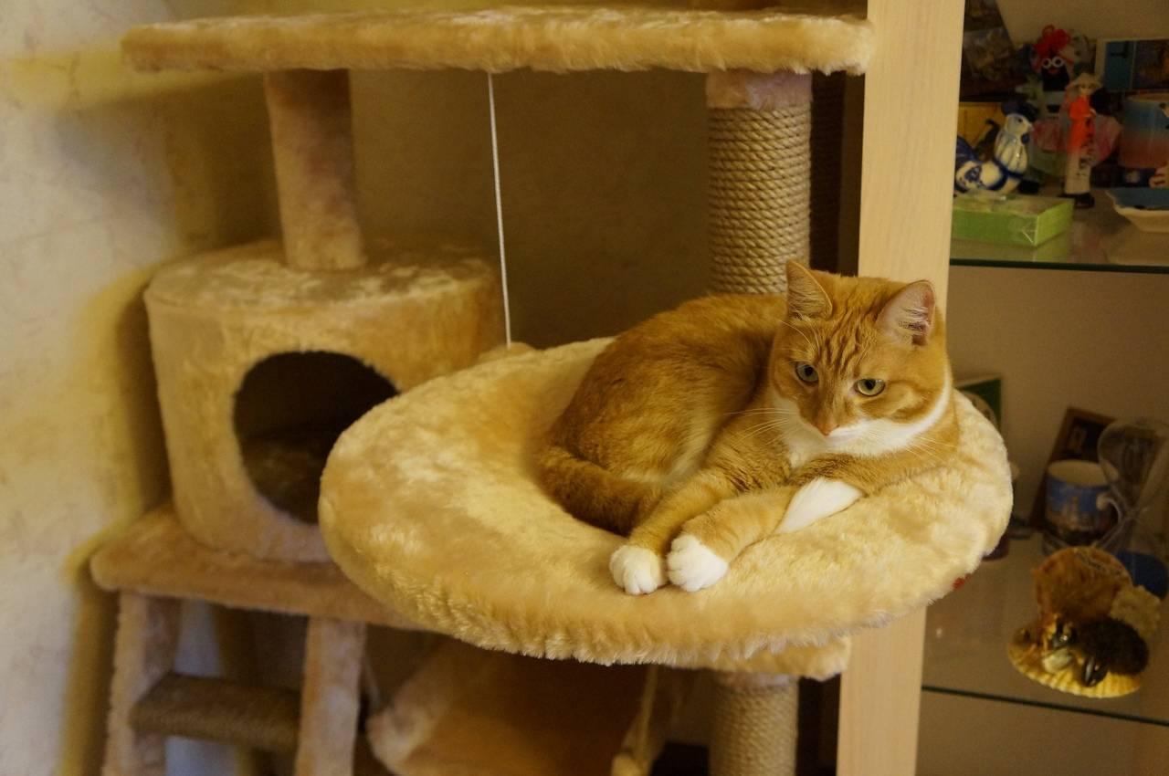 Как сделать для кошки из свитера своими руками: пошаговое руководство, как сделать лежанку для кота самостоятельно