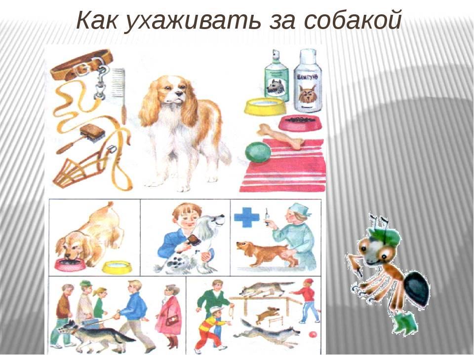 Как ухаживать за щенком – рекомендации заводчиков   dogkind.ru