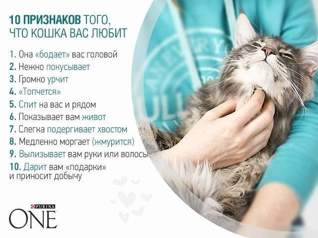 9 признаков того, что ваша кошка вас обожает :: инфониак