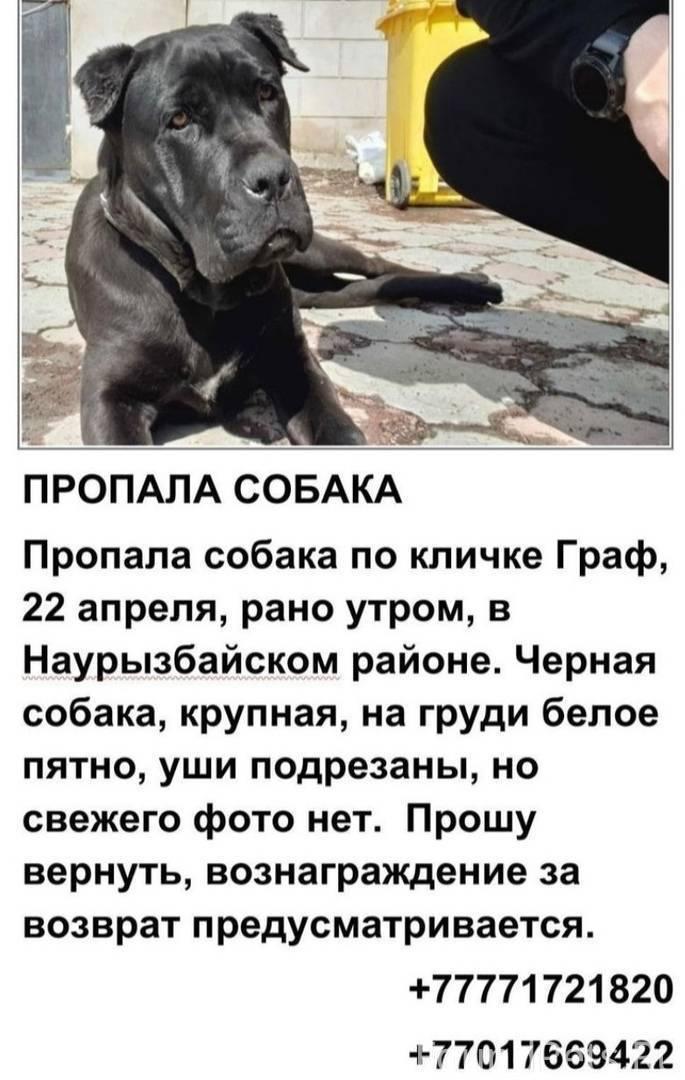 Собаки российских звезд: подборка фото