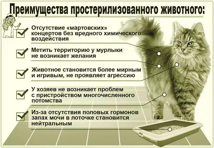 Как растут коты и кошки?