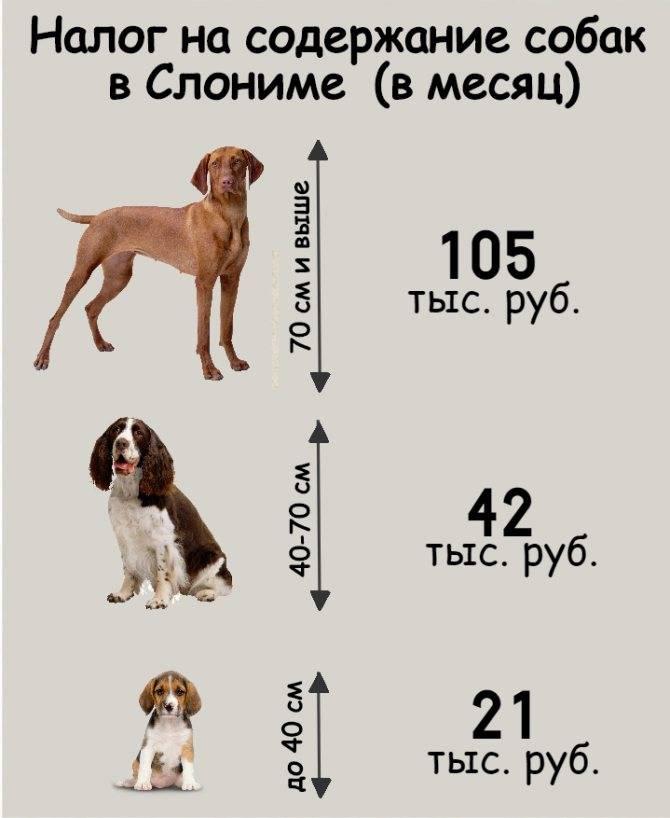 Во сколько месяцев лучше разлучить щенка с мамой: сроки для хаски, прочих пород