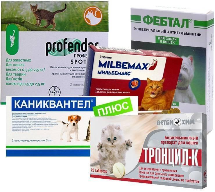 Глисты у кошек: симптомы, причины, способы лечения в домашних условиях и в ветеринарных клиниках.