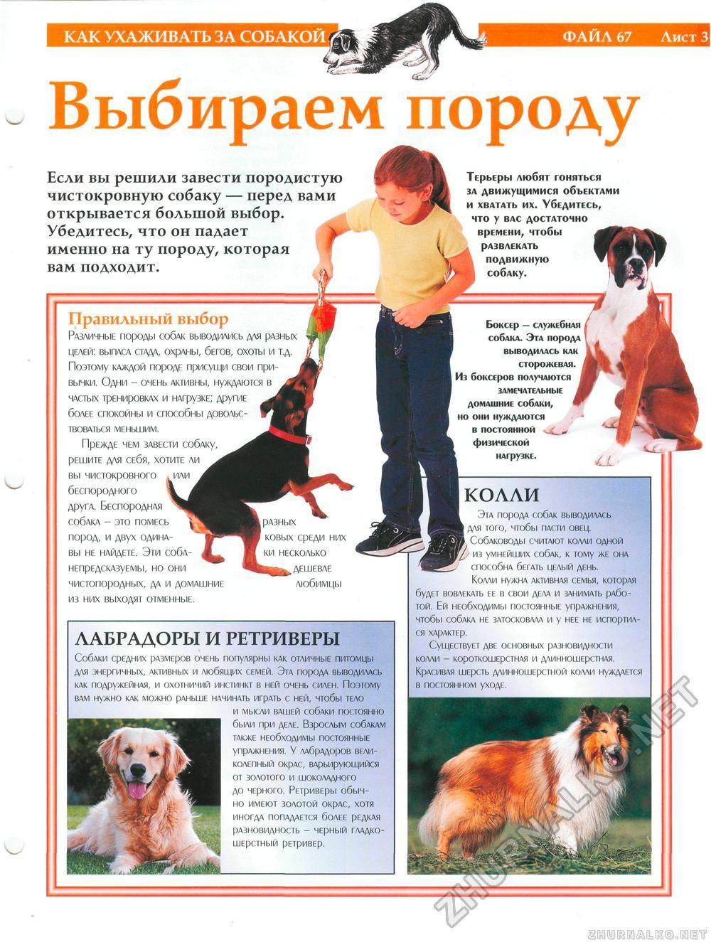 Дог – описание породы с фото. уход, разновидности, выбор щенка, цена