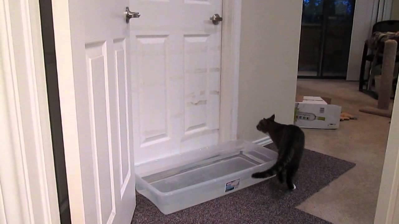 Кошка на пороге у двери: примета