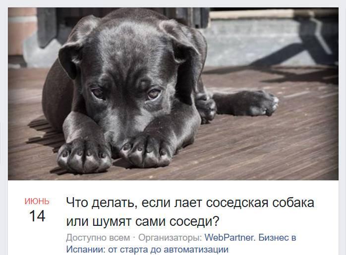 Собака лает у соседей: что делать по закону? :: businessman.ru