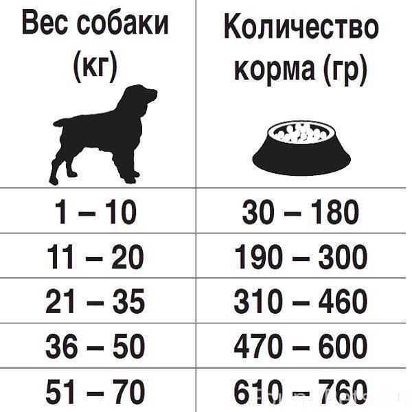 Как ухаживать за шарпеем и чем его кормить? особенности содержания этой породы собак