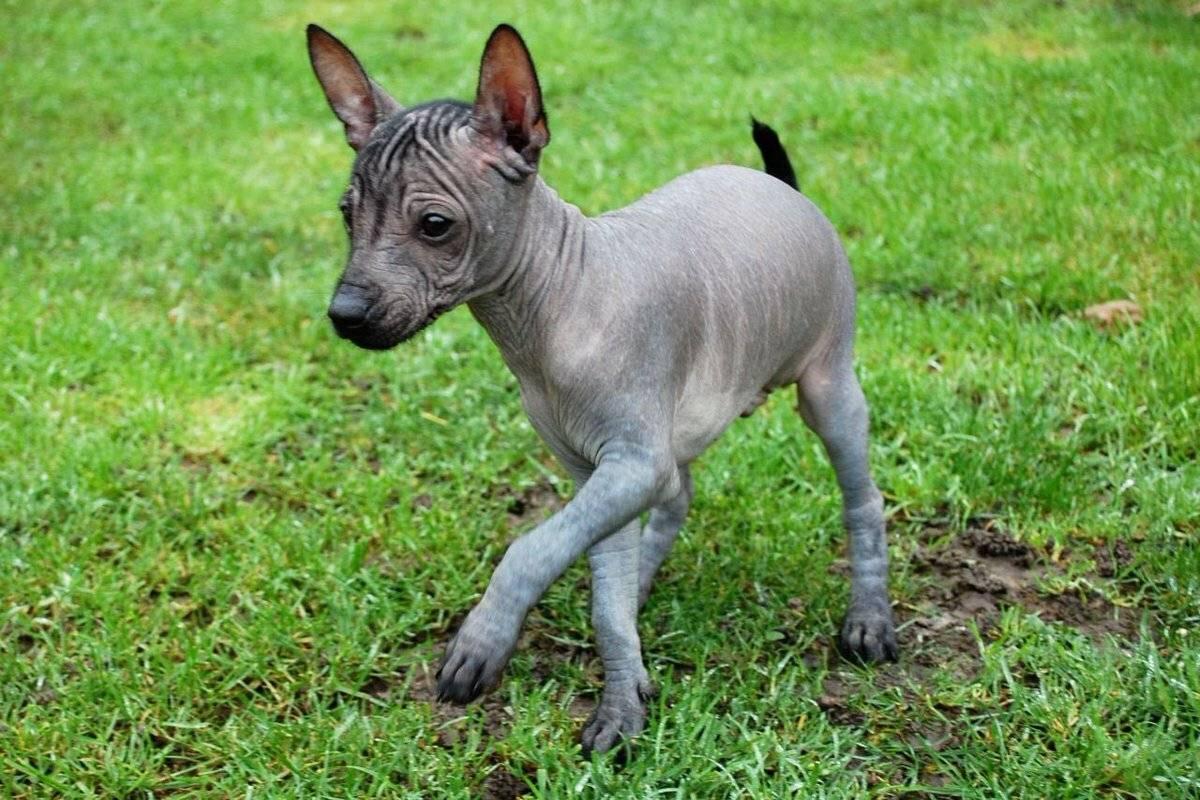 Виды собак - популярные породы (34 фото): самые модные виды собак в россии, японии, америке и европе с названиями, топ востребованных питомцев в мире