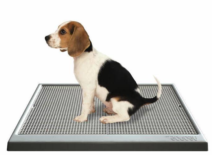 Как приучить щенка к туалету в квартире: быстро и к одному месту