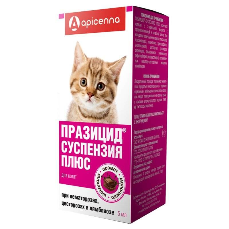 Дирофен для кошек – инструкция по применению препарата от глистов