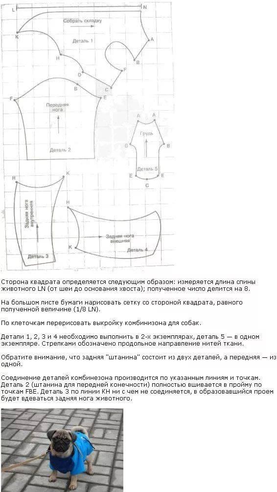 Гардероб для очаровательного питомца: как создать нарядную и практичную кошачью одежду
