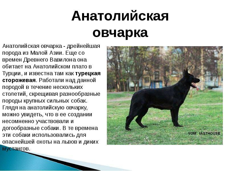 10 древнейших пород собак