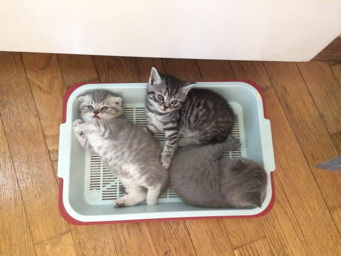Кошка перестала  ходить в лоток? - что делать, если кошка перестала  ходить в лоток?
