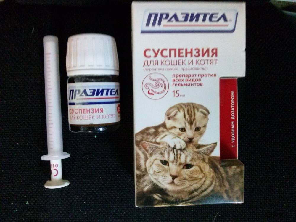Можно ли давать таблетки от глистов беременной кошке, какие дозировки