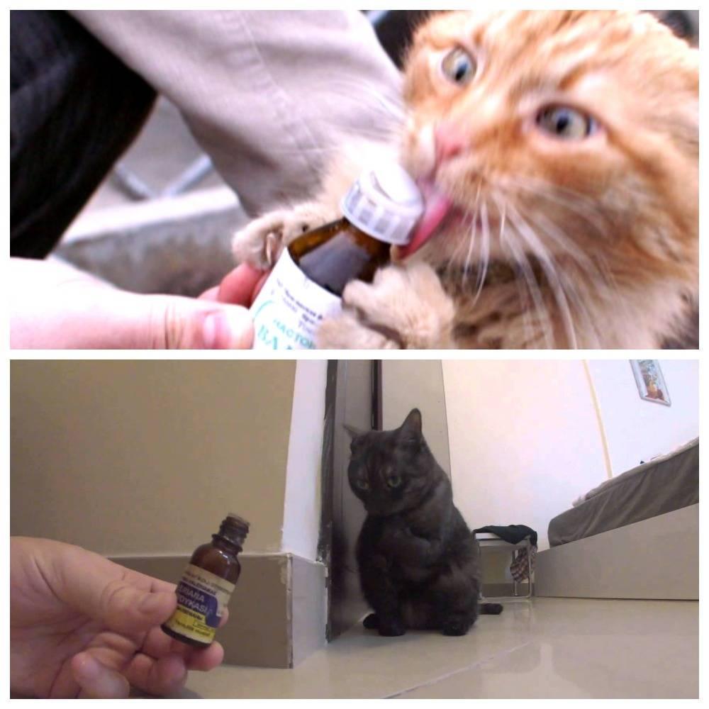 Интересные факты о кошках. зачем китайцы нюхают котов: чем опасно и как это правильно делать