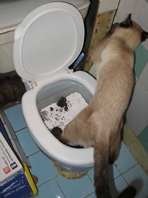 Запор у кота: что делать в домашних условиях и в каких случаях срочно обратиться к врачу