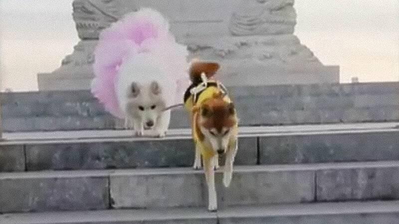 Топ-12 самых дорогих собак в мире