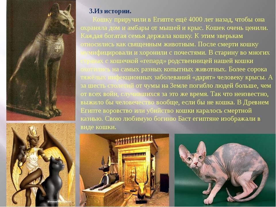 Происхождение и эволюция собак.