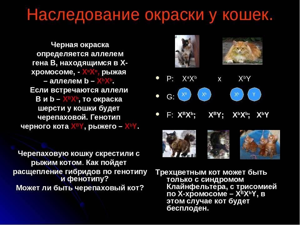 Сколько у кошки хромосом, генетические особенности животного и возможные отклонения