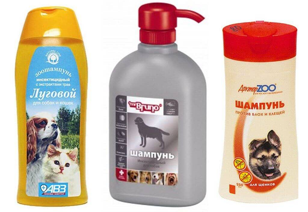 Как мыть кота без специального шампуня: чем можно помыть?