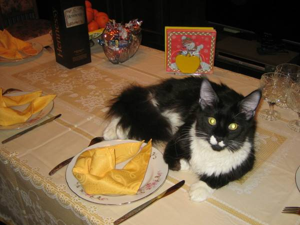 Как отучить кота лазить на стол - эффективные методы