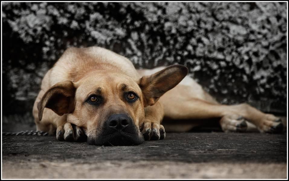 Какие поступки хозяина обижают собаку