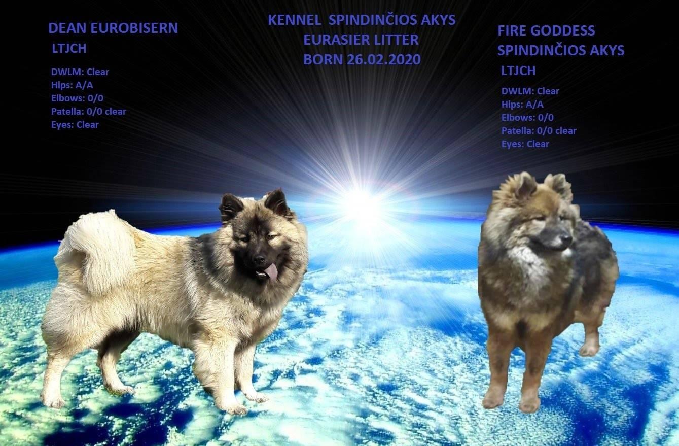Чинук: как содержать собаку, стандарт породы, нюансы воспитания и дрессировки, выбор щенка, цены, фото и отзывы