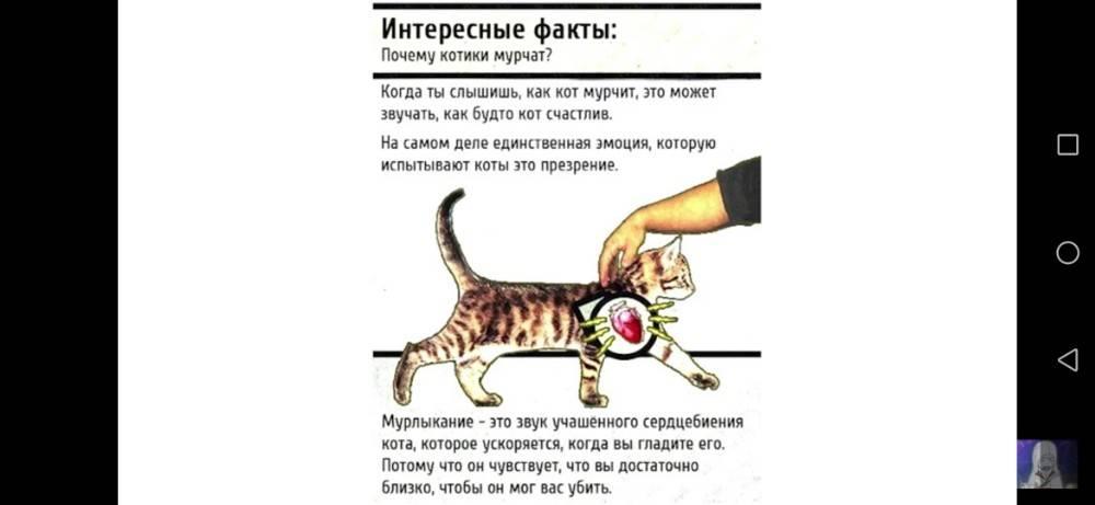 Можно ли целовать кошек