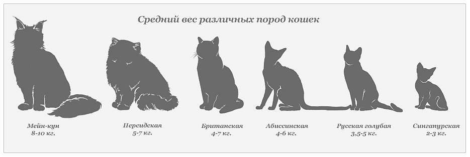 Рост кота от первых дней: как взрослеют и развиваются кошки