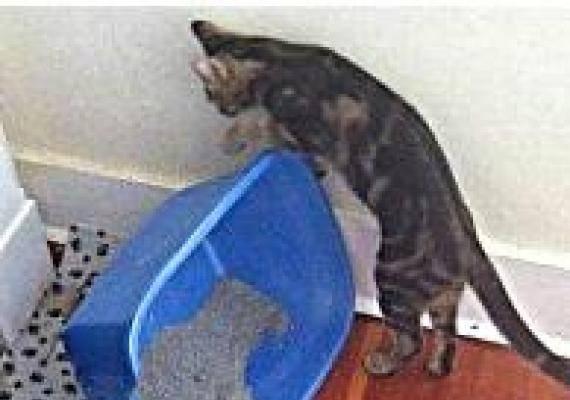 Кошка стала писать где попало – основные причины проблемы и средства для ее решения