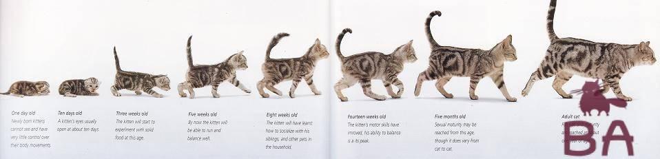 Как научиться определять возраст котенка: основные признаки и критерии