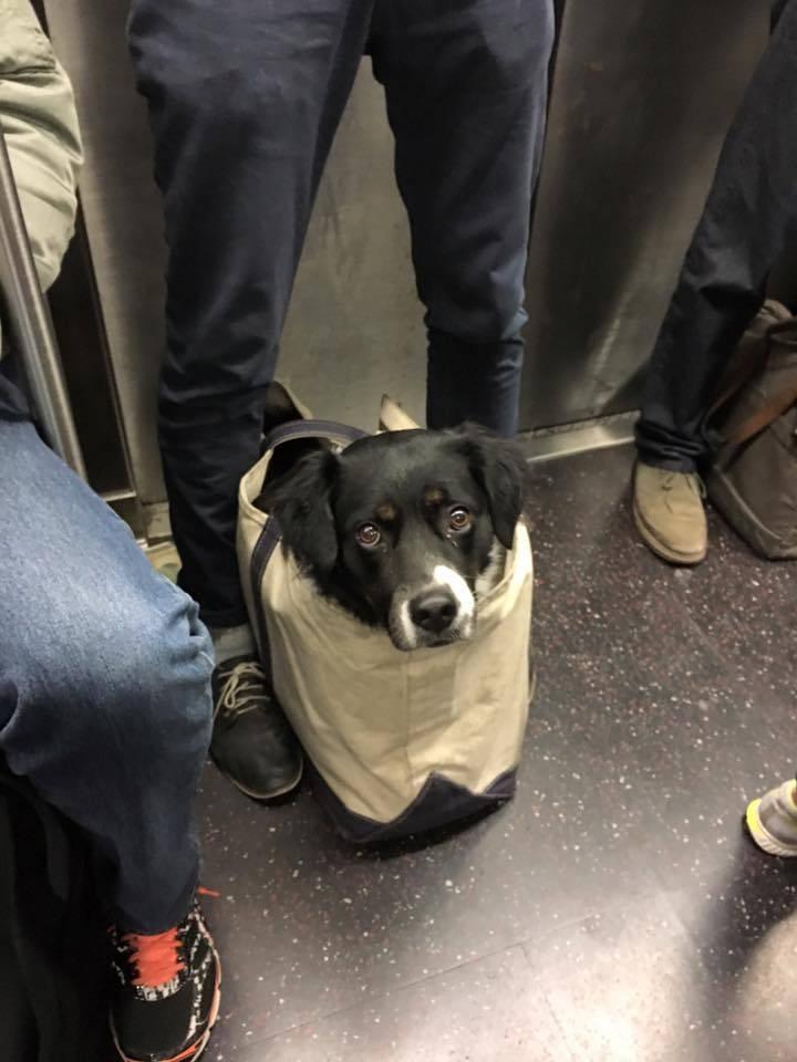 Правила перевозки собак по россии и за рубеж