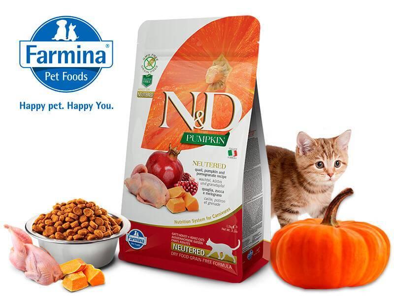 Сравниваем и выбираем лучший корм для котят