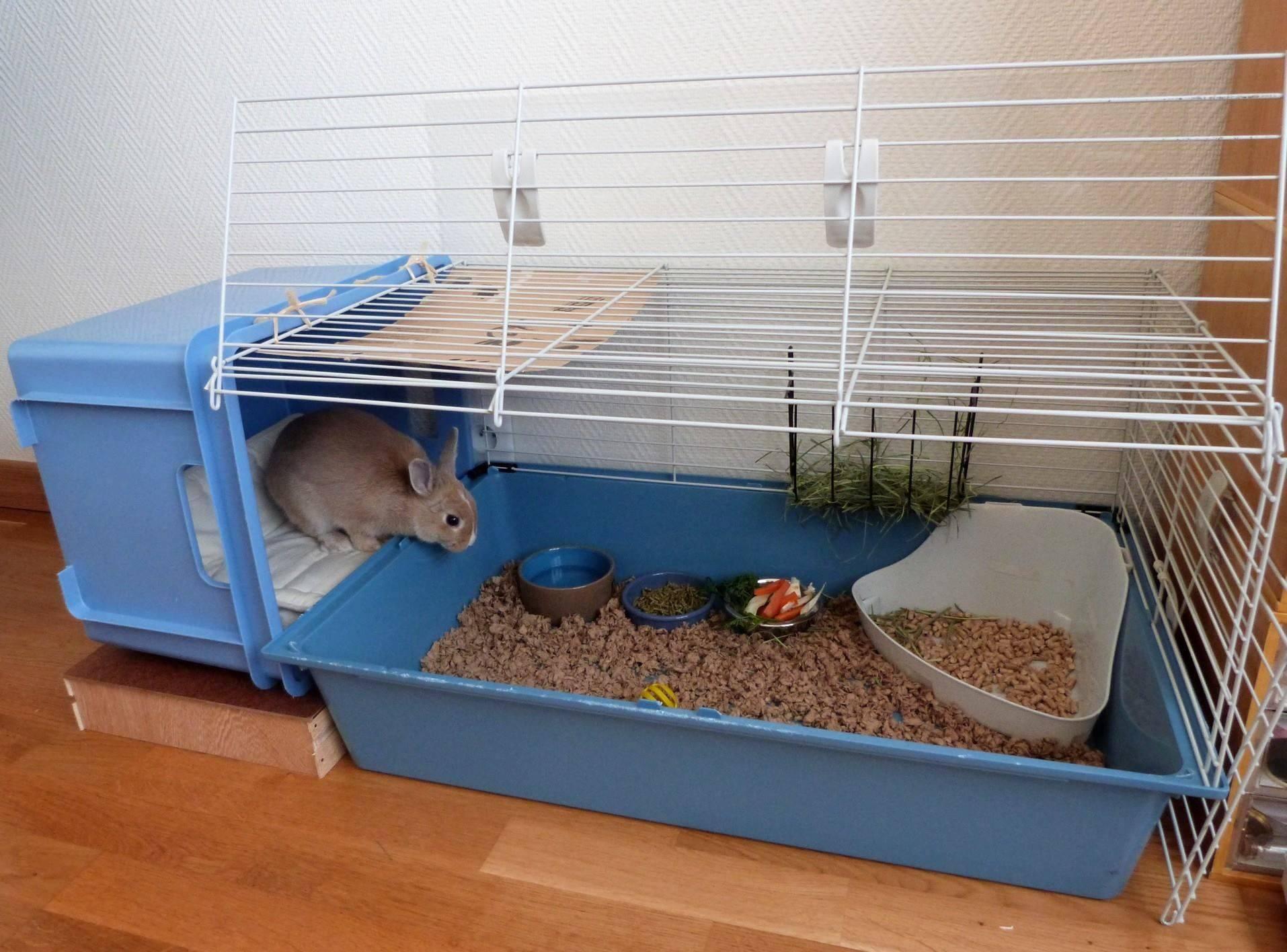 Декоративные кролики: фото животного, породы, виды уход, питание и содержание в домашних условиях