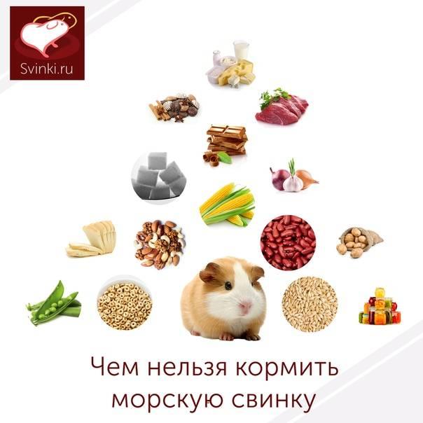 8 продуктов, которые нельзя давать домашним животным: новости, животные, собаки, щенок, дрессировка, еда, кошка, домашние животные