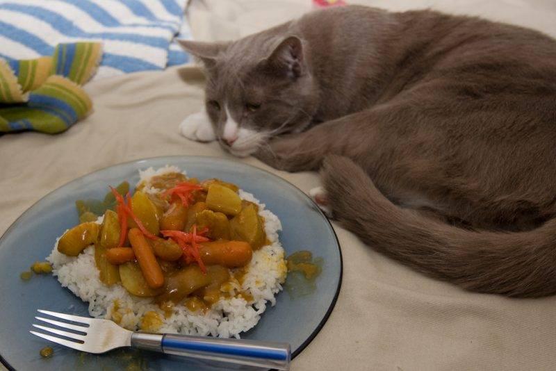 """Почему кошка мало пьёт?   блог ветклиники """"беланта"""""""