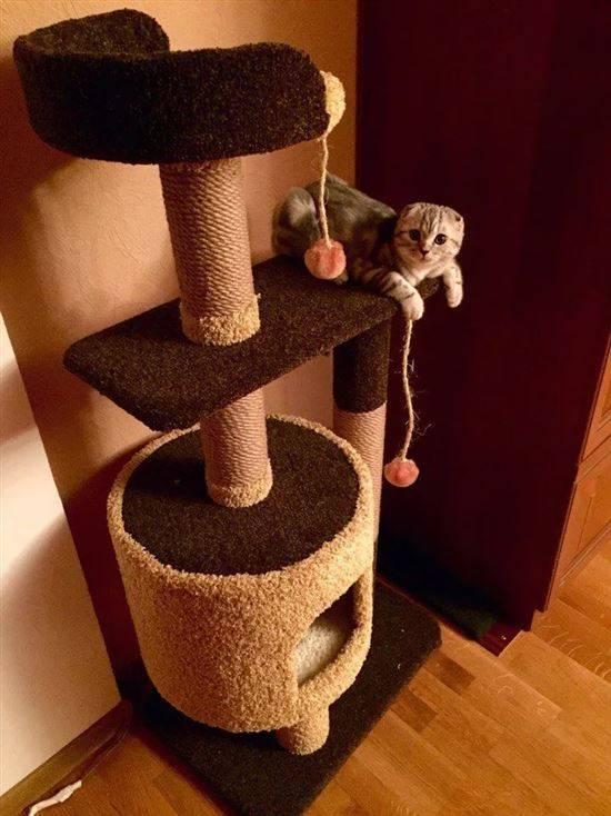 Как сделать когтеточку для кошки своими руками: мастер-класс, пошаговая инструкция (схемы, размеры, фото и видео)