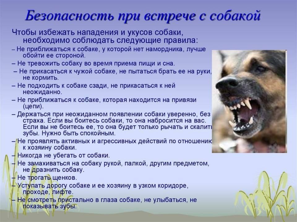 Почему собаки всегда так безумно рады, когда видят своего хозяина