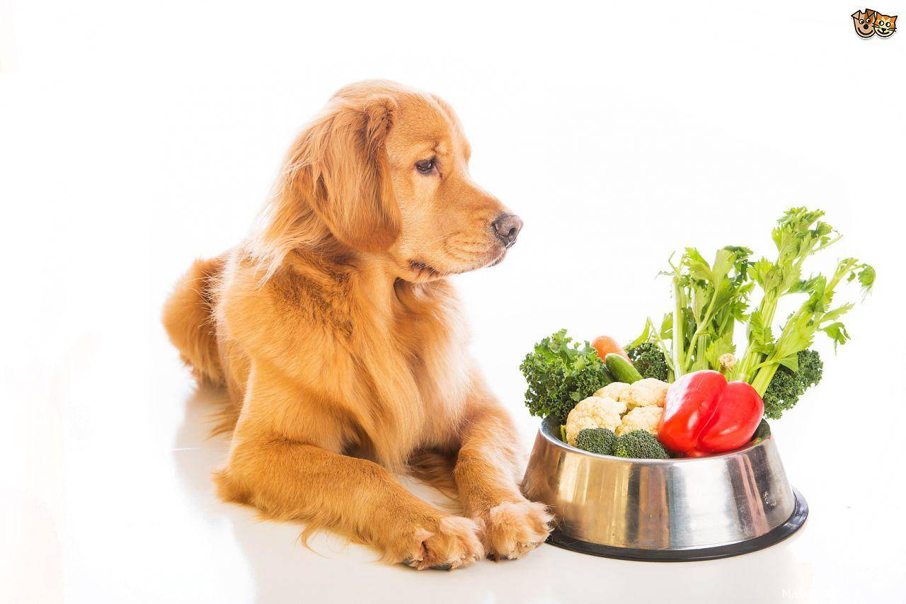 Ожирение у собак и кошек - сибирский медицинский портал