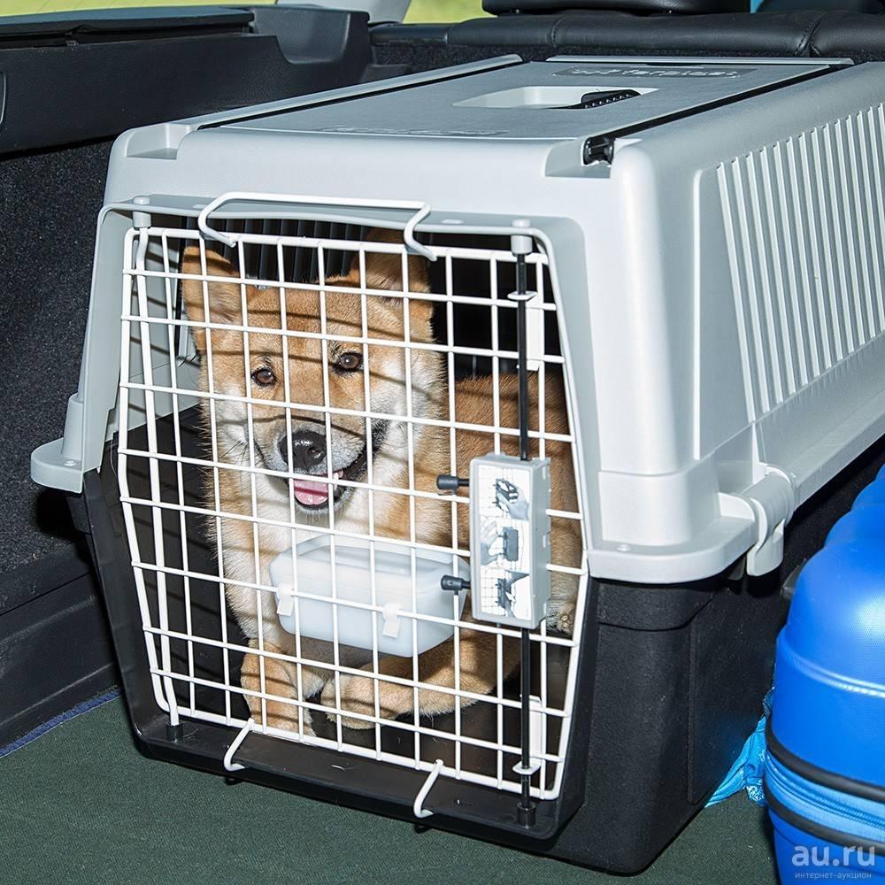 Правила перевозки животных на воздушных судах: что нужно знать хозяину?