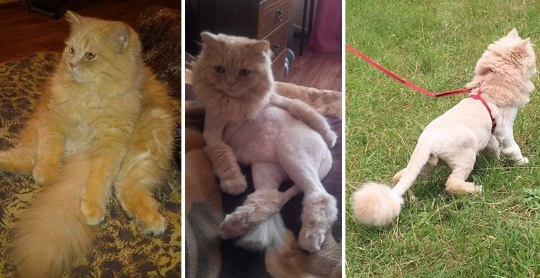 Нужно ли стричь кошку? плюсы и минусы процедуры, практические советы